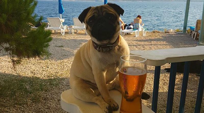 hunde kroatien 2019