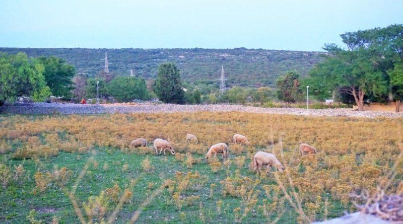 Kroatische Inseln, insel cres, osor auf cres